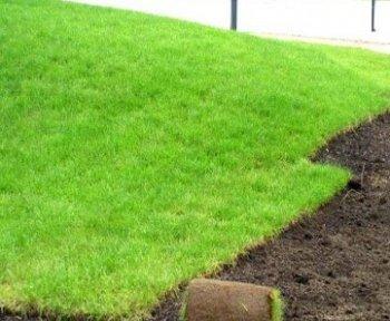 Обустройство газона: создание подложки под основание
