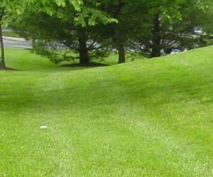 Дикорастущие травы для газона и уход за ними