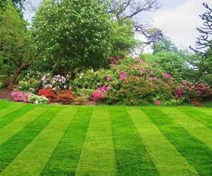 Вся красота природы в рулонных газонах