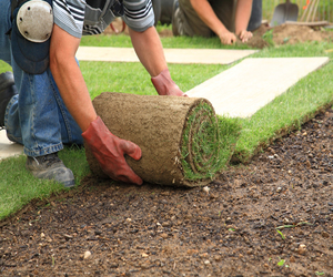 Рулонный газон на участке своими руками
