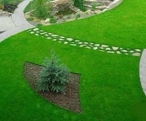 Травяной газон на дачном участке