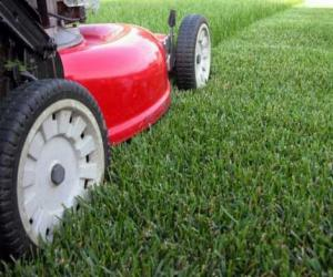 Какие бывают газонокосилки?