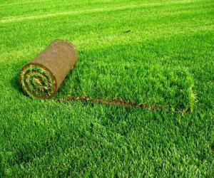 Лечение газона от мха