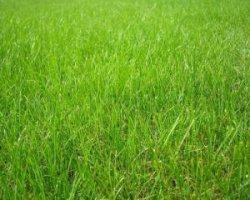 Когда покупать семена для газонов?