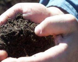 Самые эффективные газонные удобрения