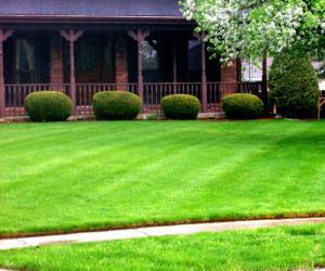 Первая стрижка газона: правила и советы