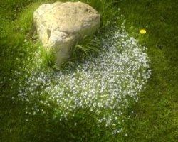 Борьба с одуванчиками: убираем сорняк навсегда