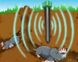 Защита газона от кротов и других грызунов