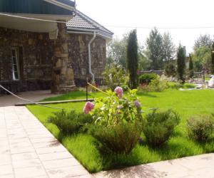 Хвойный газон: идеи